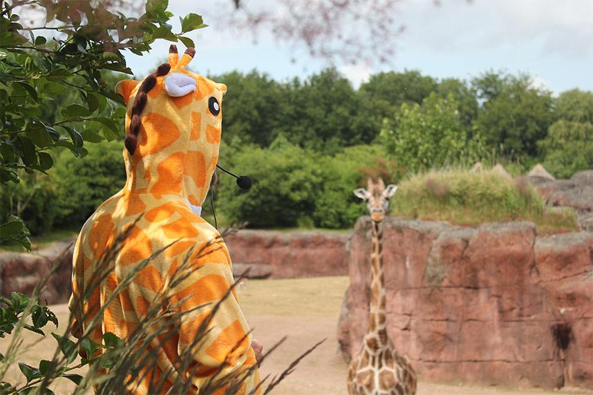 lex_giraffe_full