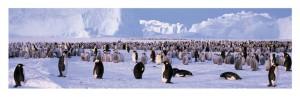 pinguïn onesies